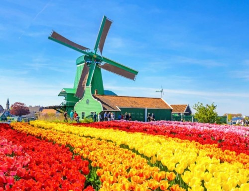 50 odtieňov kvality: 2000 certifikovaných kariérových poradcov v krajine tulipánov